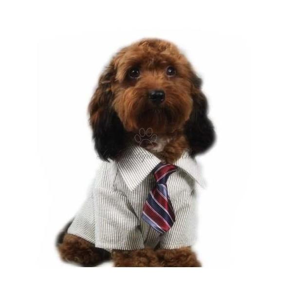 Cravatta Color