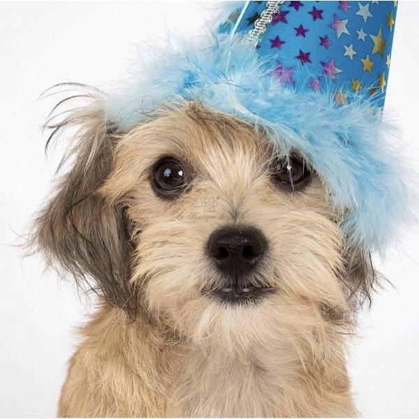 Cappellino Pet Party