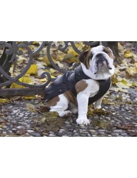 Giubbotto Imbottito Black Bulldog Carlino