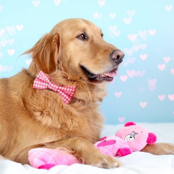 Gioco in Peluche Pink Bear